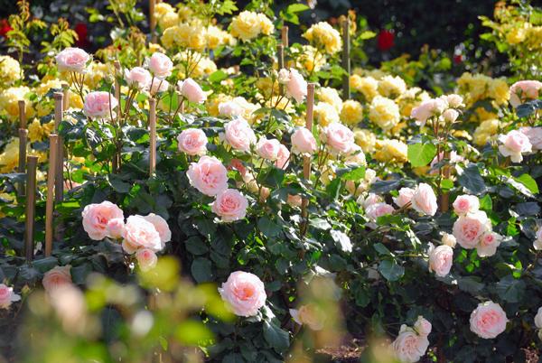 1905shimaitoshi017.jpg