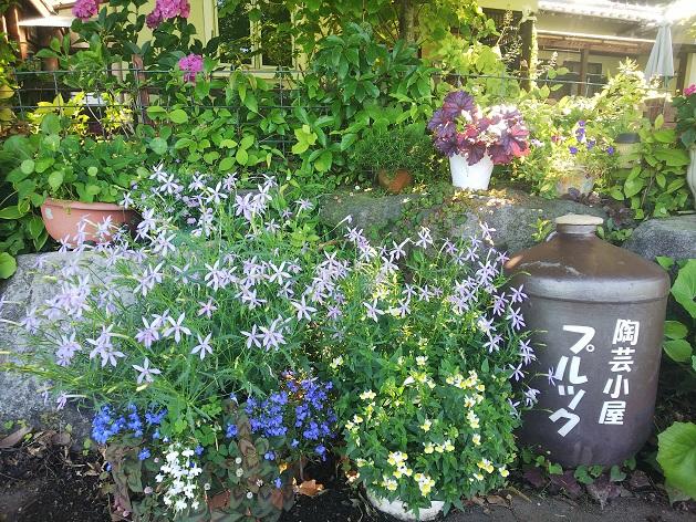 プルックと小花.jpg