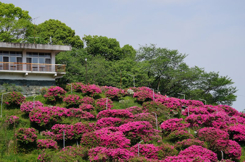 shiinomiya01.jpg