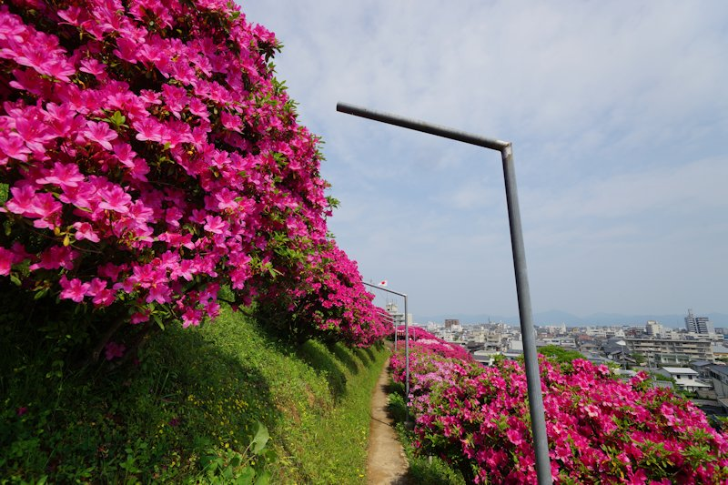 shiinomiya02.jpg