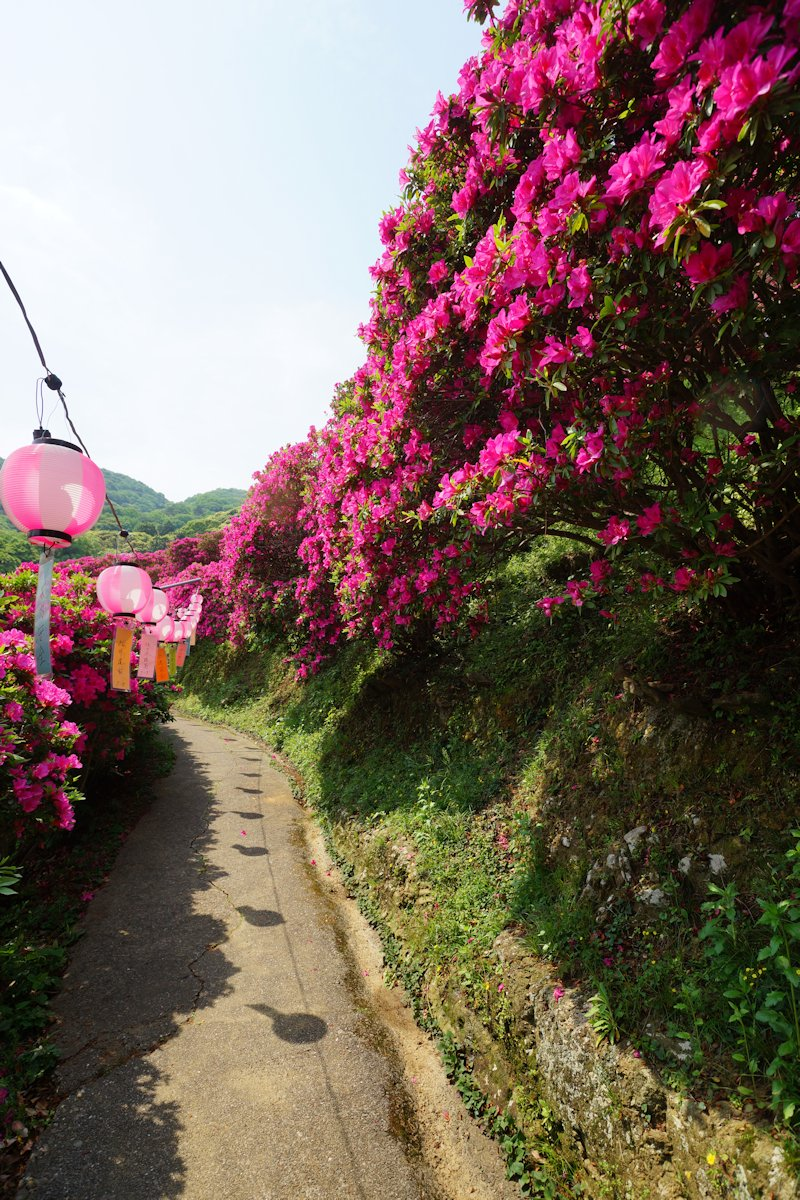 shiinomiya07.jpg