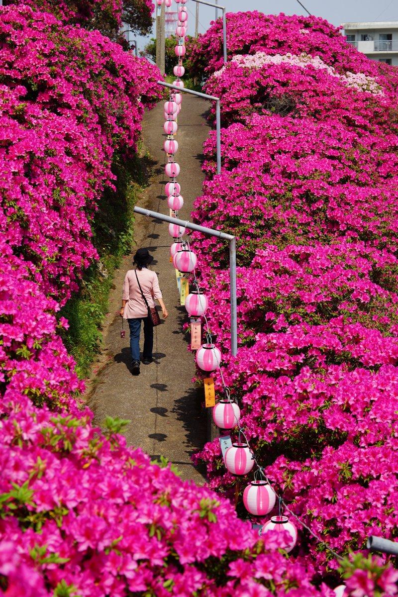 shiinomiya08.jpg