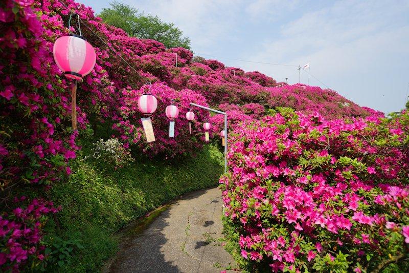 shiinomiya10.jpg