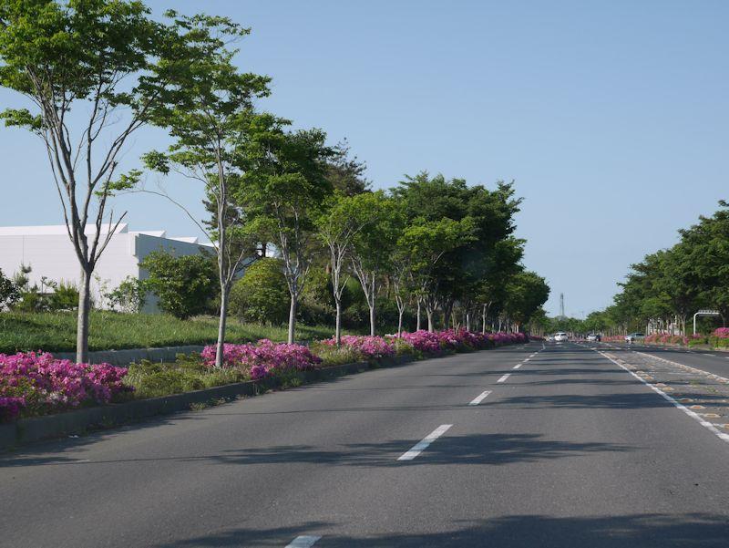 ajigaura01.jpg