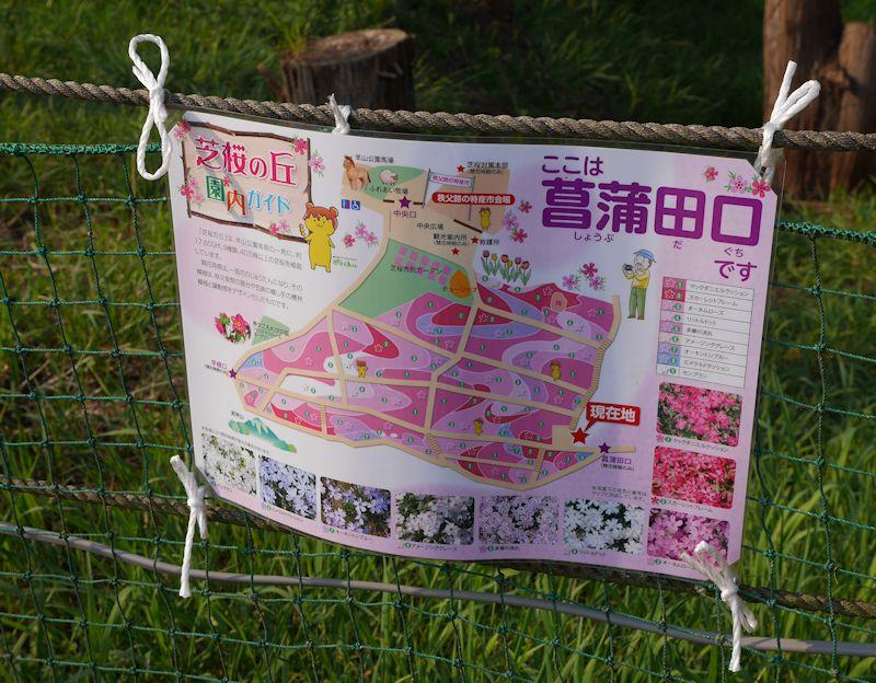 shibazakura02.jpg