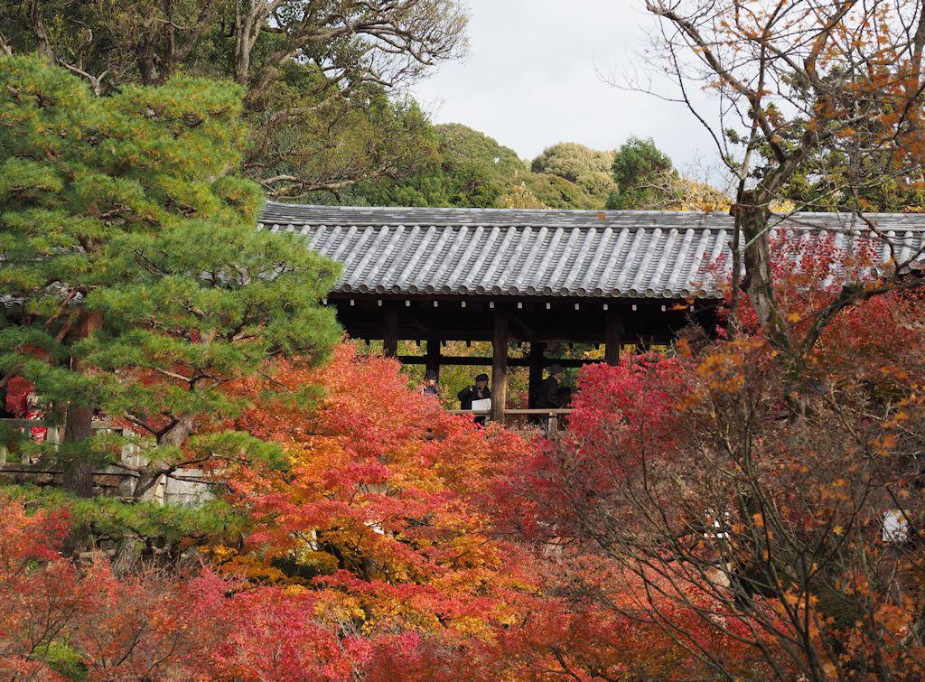 kyoto09.jpg