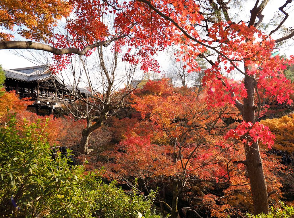 kyoto18.jpg