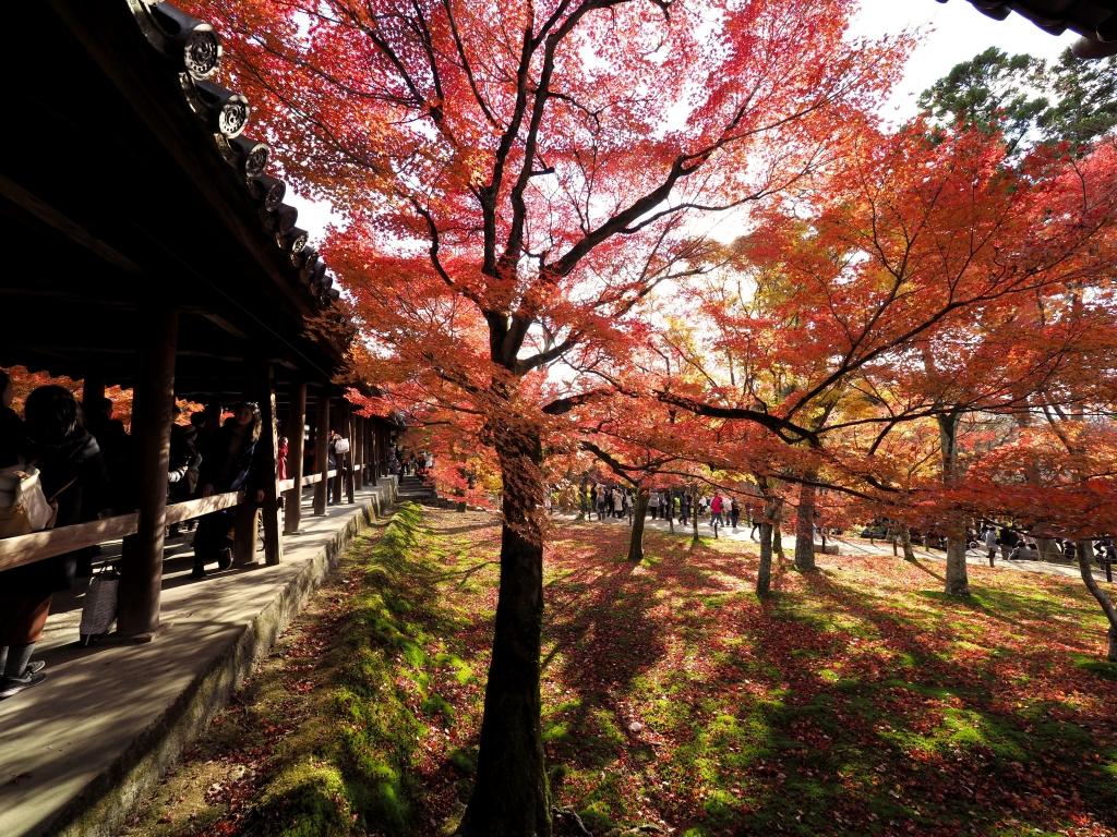 kyoto24L.jpg