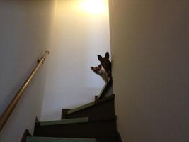 自宅の階段