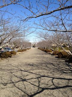 館山旅行 安房神社
