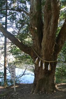 館山旅行 安房神社木