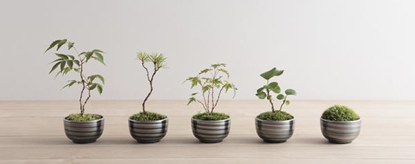 ミニ盆栽,コケ,苔