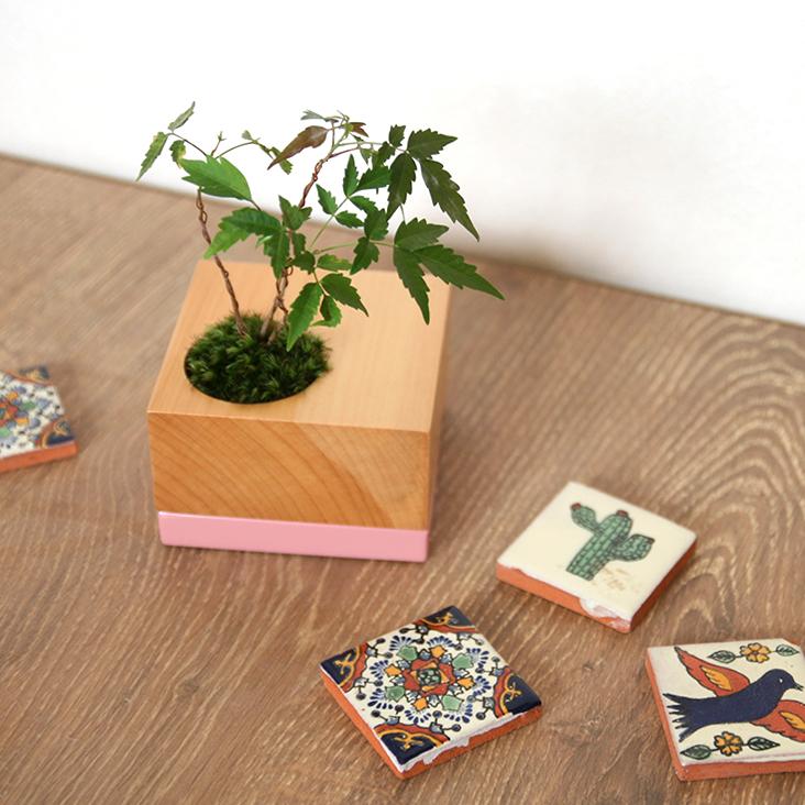 ミニ盆栽,盆栽,ちょこぼん