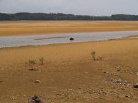 マングローブを植えた潟原海岸。