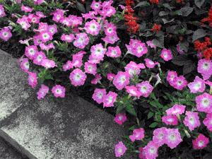 あきる野市の花壇
