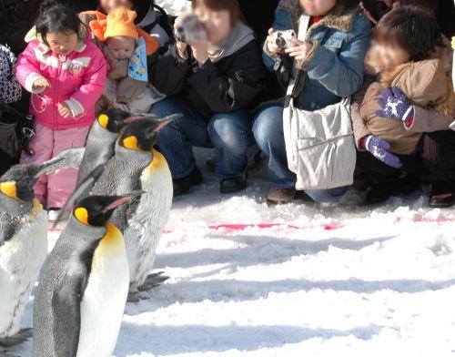 お散歩するペンギンを見る娘2人