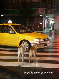 ホテル近くで見たイヌたち