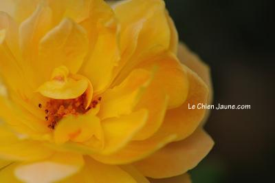 今朝、咲いたモリニュー