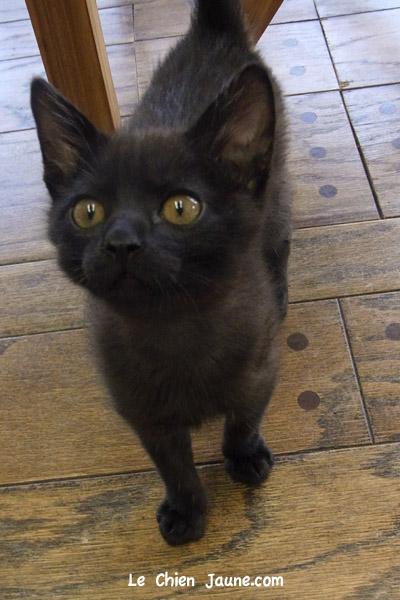 黒ラブに育てられた黒ネコ