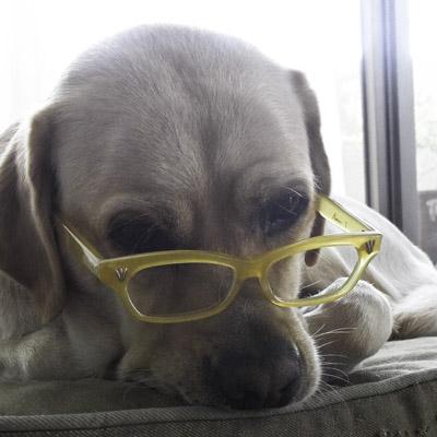 黄色い犬と黄色いメガネ