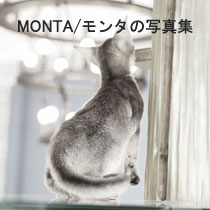 monta-0219.jpg