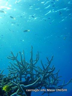 グレートバリアリーフとサンゴ礁