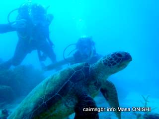 GBR Green Sea Turtle