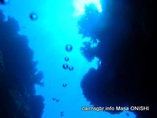 GBR coral reef