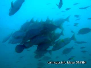 GBR fish school
