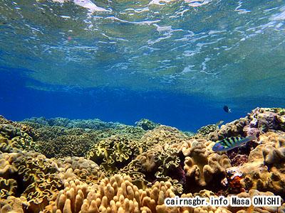 グレートバリアリーフの水中世界