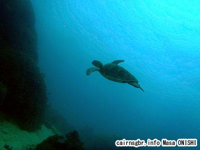グレートバリアリーフでウミガメとダイビング