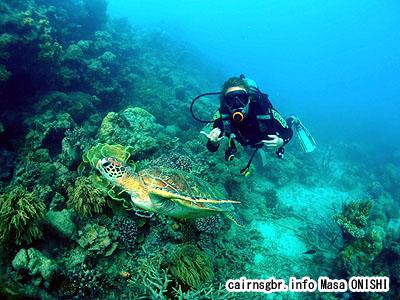 グレートバリアリーフでアオウミガメと一緒にダイビング。