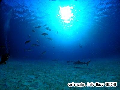 サメの餌付け