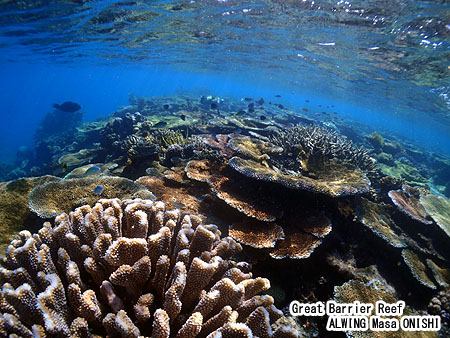 Great barrier reef under water