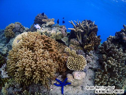 ALWING ケアンズ ダイビング グレートバリアリーフ オーストラリア サンゴ礁