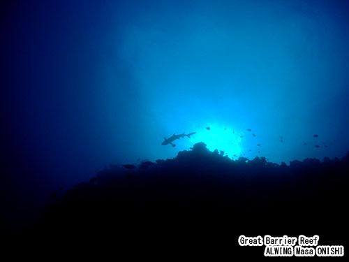ケアンズ ダイビング オーストラリア グレートバリアリーフ ツアー