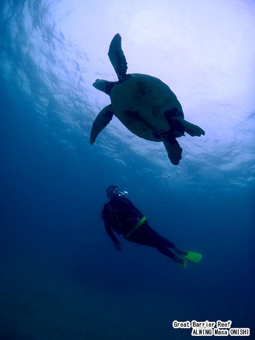 cairns Great Barrier Reef Diving alwing.net