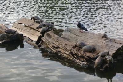 巾着うどんを食べた後は猿沢の池や奈良公園を散策へ!