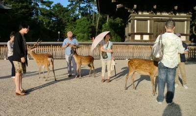 奈良公園には鹿さんです。