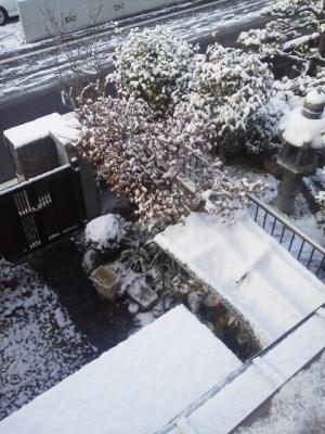 朝起きたら真っ白で雪が積もって耳鼻科へは遅れました