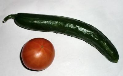 トマト、きゅうりのダブル収穫そしてユースト配信!