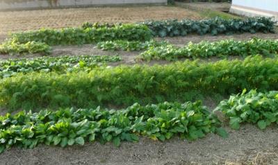 新米収穫も終わり畑の中の様子も変わっていましたね