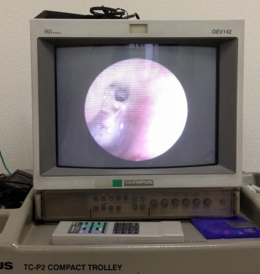 4か月振りの耳鼻科通院日でした