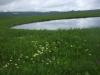 140705コオホネ沼付近のチングルマ
