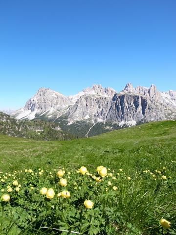 高山植物と山
