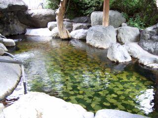山口温泉5