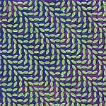 Animal Collective-Merriweather Post Pavilion