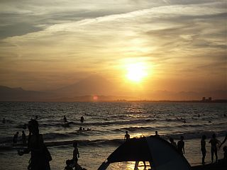 Sunset Palm7