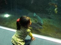 水族館が大好きなハナちゃん