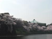 桜の奥に日本武道館